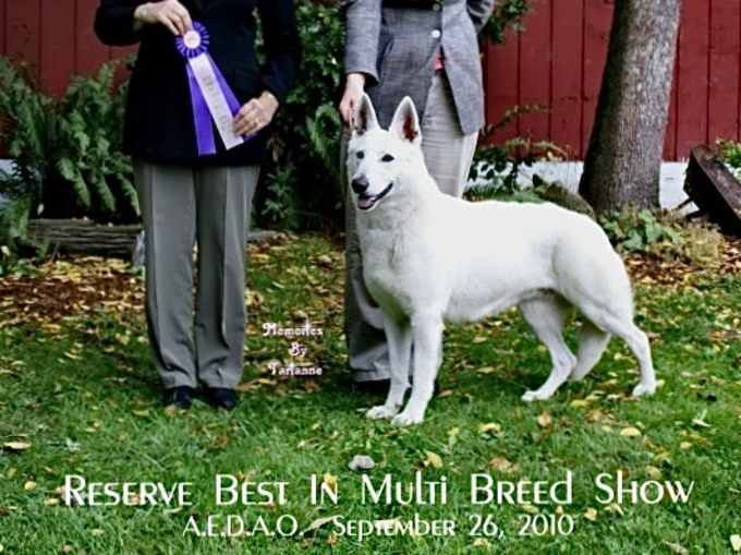 Sapphire winning Reserve Best in Multi-Breed Show