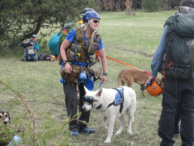 White Shepherd search and rescue training